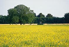 GL_Grasas Biodegradables de Origen Vegetal para el Medio Ambiente